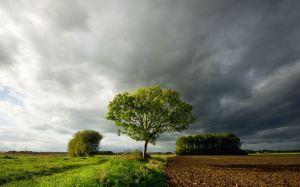 clouds_gathering_before_rain_field_tree-wide