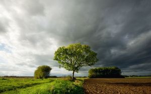 clouds_gathering_before_rain_field_tree-wide