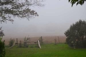 grass trees field mist