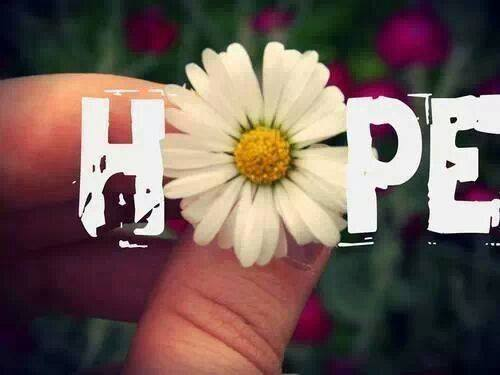 A Hope Daisy a Day